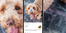 Google Lens is now live for mobiles