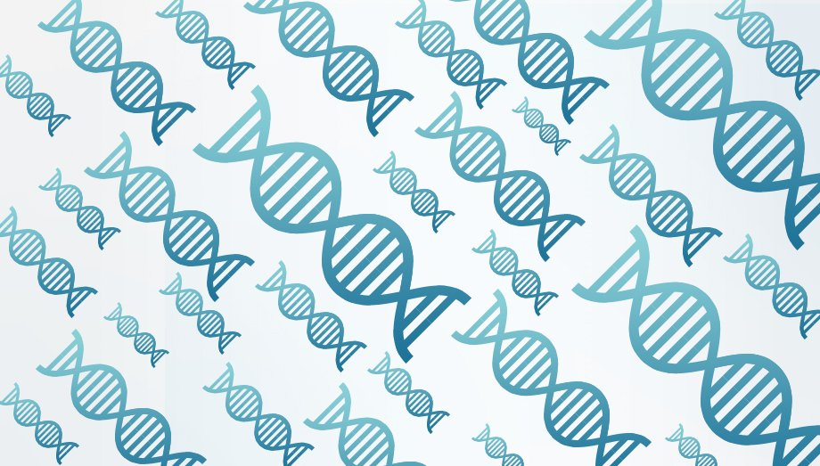 An illustration of DNA