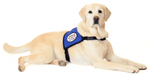 The therapy dogs to reducing stress and anxiety
