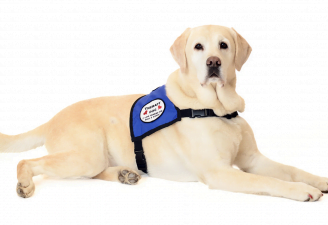 an image of therapy dog sitting