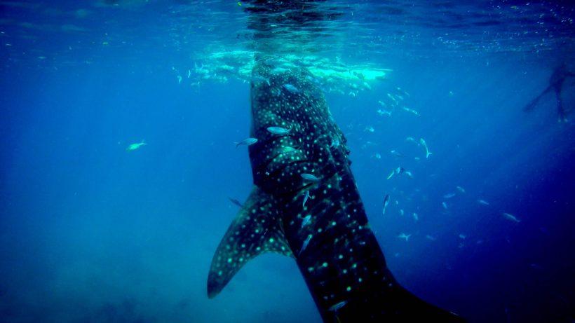 Whale call