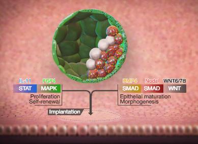Nature-biotech-innovations-2018