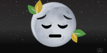 Sad news: The moon plants are dead