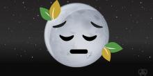 Sad news: The moon plants are dead
