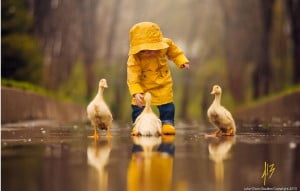A photograph of a child playing with ducks in the rain