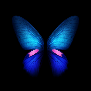 blue butterfly galaxy fold wallpaper