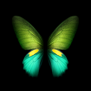 ocean green galaxy fold butterfly wall