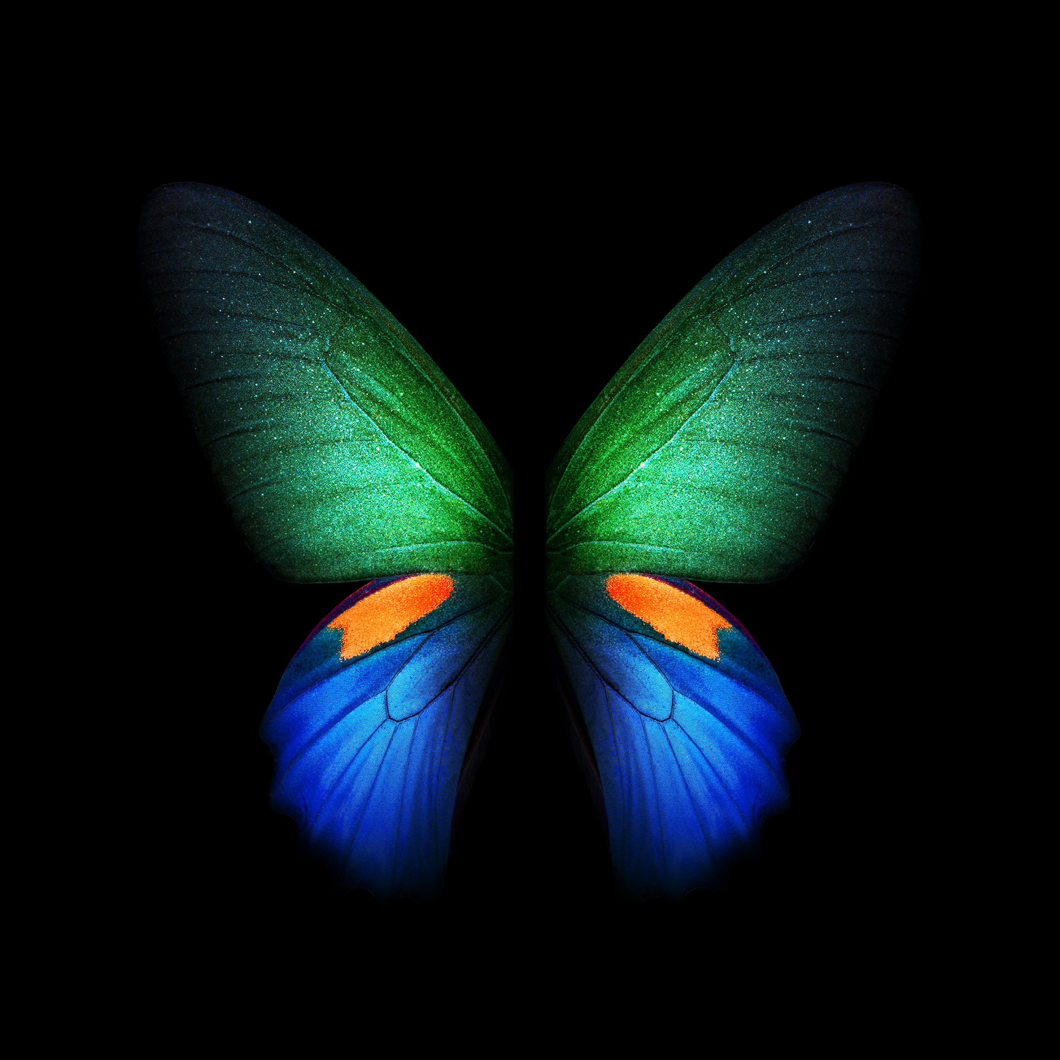 Galaxy Fold butterfly Wallpaper
