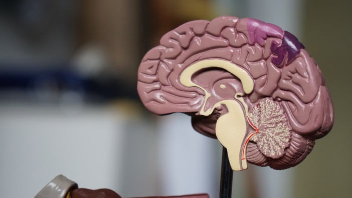 A dummy brain for biology lab