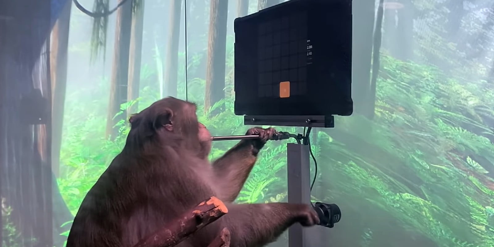 Neuralink shows off cyborg monkey playing ping-pong using a brain implant
